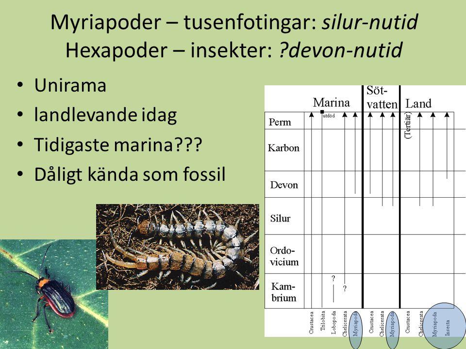 Myriapoder – tusenfotingar: silur-nutid Hexapoder – insekter: ?devon-nutid Unirama landlevande idag Tidigaste marina??? Dåligt kända som fossil