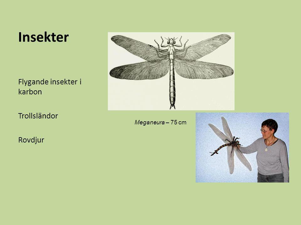 Insekter Flygande insekter i karbon Trollsländor Rovdjur Meganeura – 75 cm