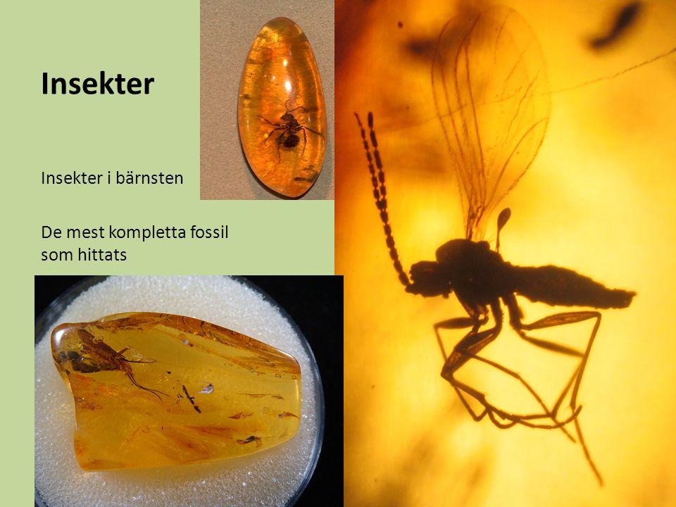 Insekter Insekter i bärnsten De mest kompletta fossil som hittats