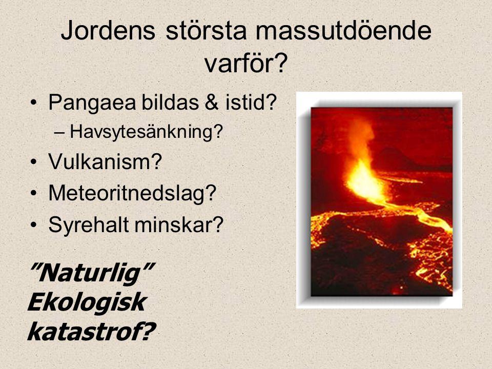 """Jordens största massutdöende varför? Pangaea bildas & istid? –Havsytesänkning? Vulkanism? Meteoritnedslag? Syrehalt minskar? """"Naturlig"""" Ekologisk kata"""