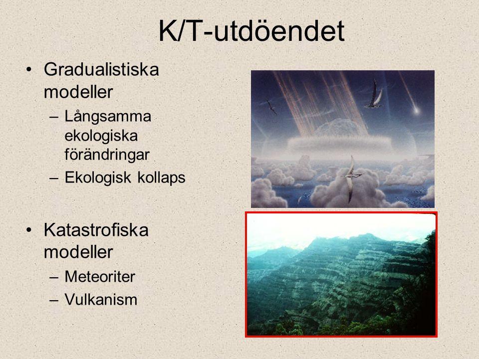 K/T-utdöendet Gradualistiska modeller –Långsamma ekologiska förändringar –Ekologisk kollaps Katastrofiska modeller –Meteoriter –Vulkanism
