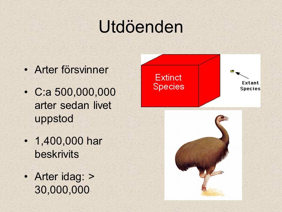 Arter försvinner C:a 500,000,000 arter sedan livet uppstod 1,400,000 har beskrivits Arter idag: > 30,000,000