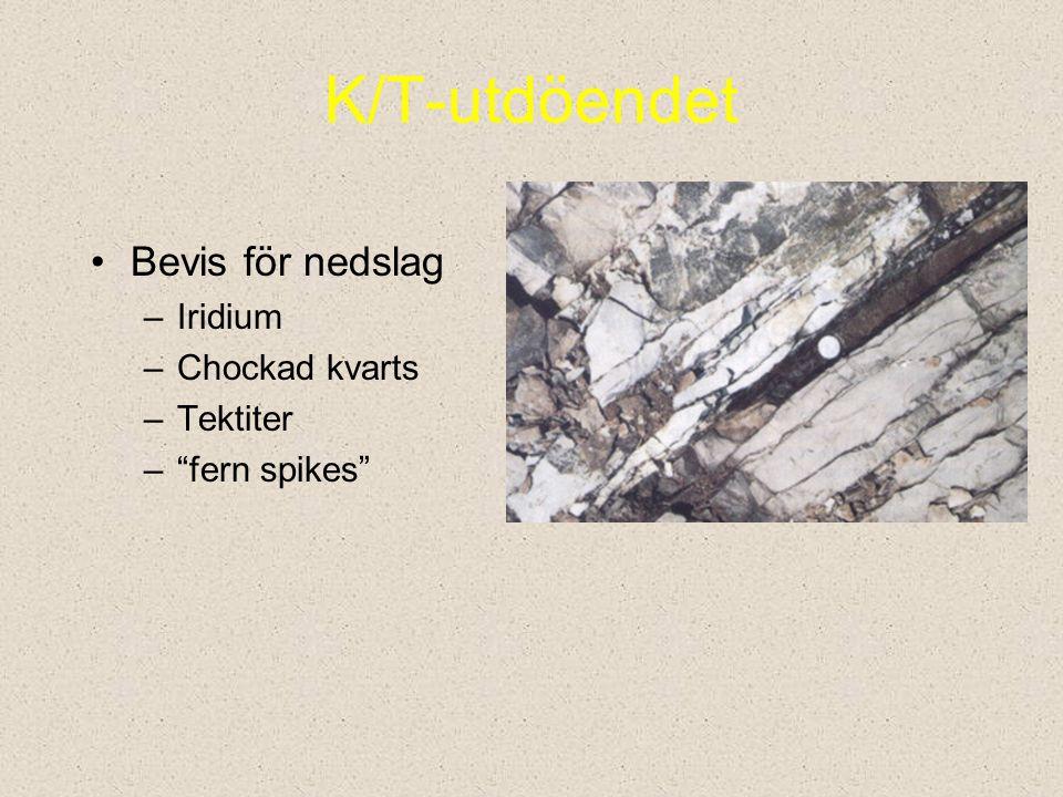 "K/T-utdöendet Bevis för nedslag –Iridium –Chockad kvarts –Tektiter –""fern spikes"""