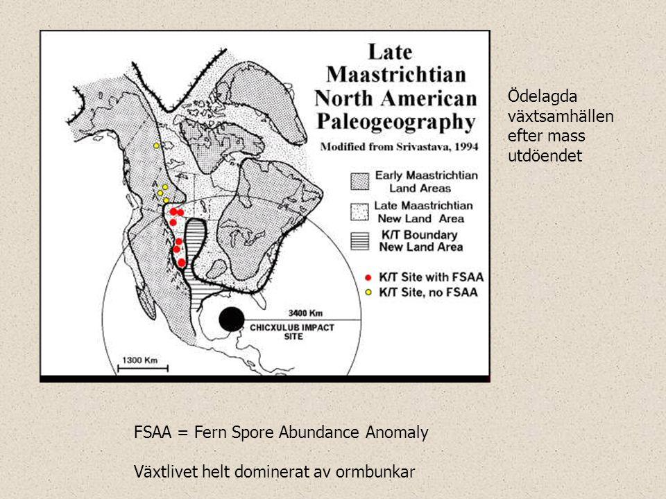 FSAA = Fern Spore Abundance Anomaly Växtlivet helt dominerat av ormbunkar Ödelagda växtsamhällen efter mass utdöendet