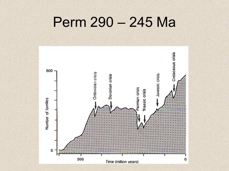 Perm-Trias Utdöendet Största utdöendet 250 Ma 90-96% av alla arter –Flesta träd och mindre växter –8 av 27 insektfamiljer –21 av 27 reptilfamiljer –Alla revekosystem –Många Ryggradslösa djur