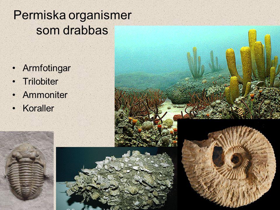 Permiska organismer som drabbas Armfotingar Trilobiter Ammoniter Koraller
