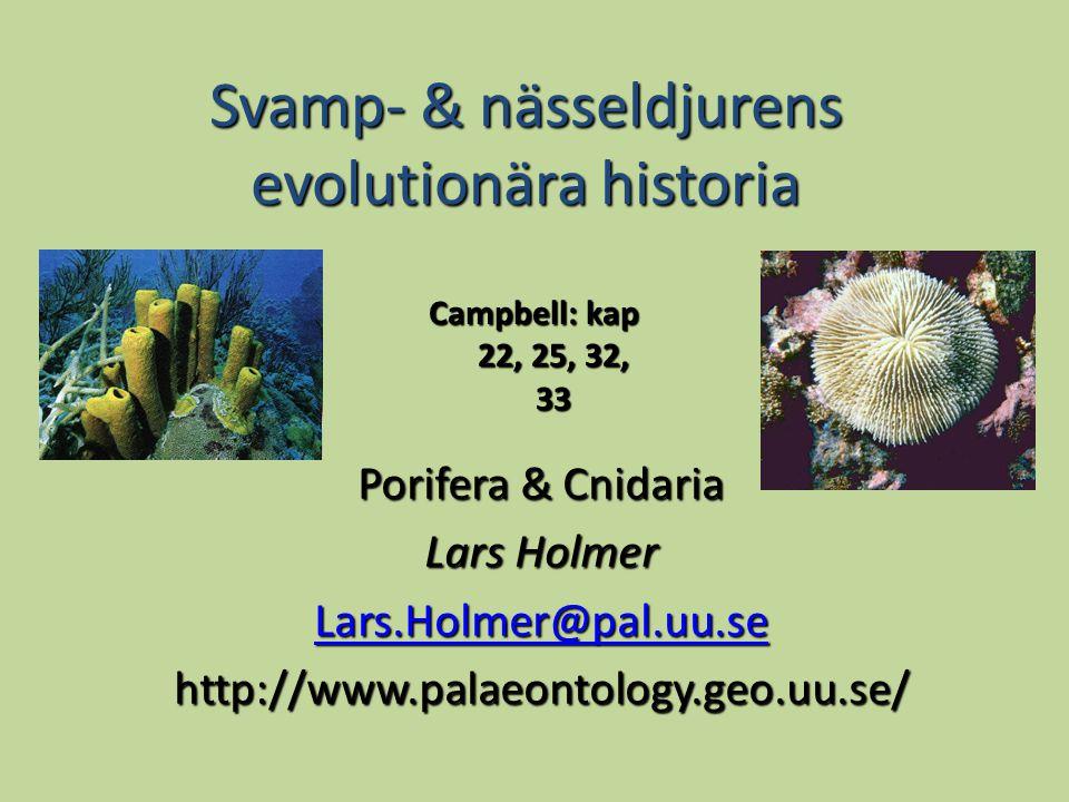 Svamp- & nässeldjurens evolutionära historia Porifera & Cnidaria Lars Holmer Lars.Holmer@pal.uu.se http://www.palaeontology.geo.uu.se/ Campbell: kap 22, 25, 32, 33
