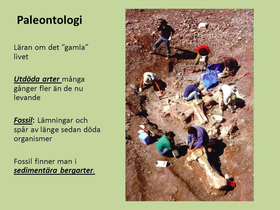 Fossila rev Rev har funnits genom nästan hela fanerozoikum Rev – med kraftigt ramverk Kalkhögar – saknar ramverk Olika organismer i olika perioder