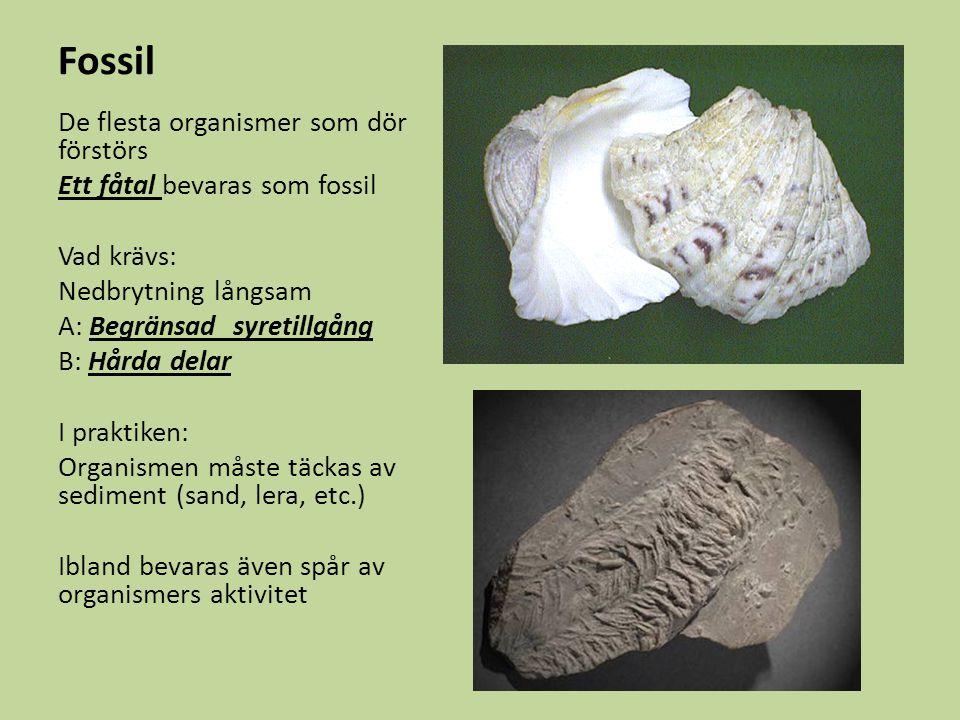 De flesta organismer som dör förstörs Ett fåtal bevaras som fossil Vad krävs: Nedbrytning långsam A: Begränsad syretillgång B: Hårda delar I praktiken: Organismen måste täckas av sediment (sand, lera, etc.) Ibland bevaras även spår av organismers aktivitet Fossil