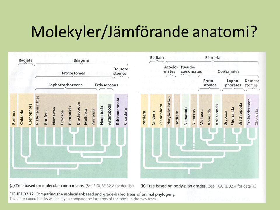 Molekyler/Jämförande anatomi?