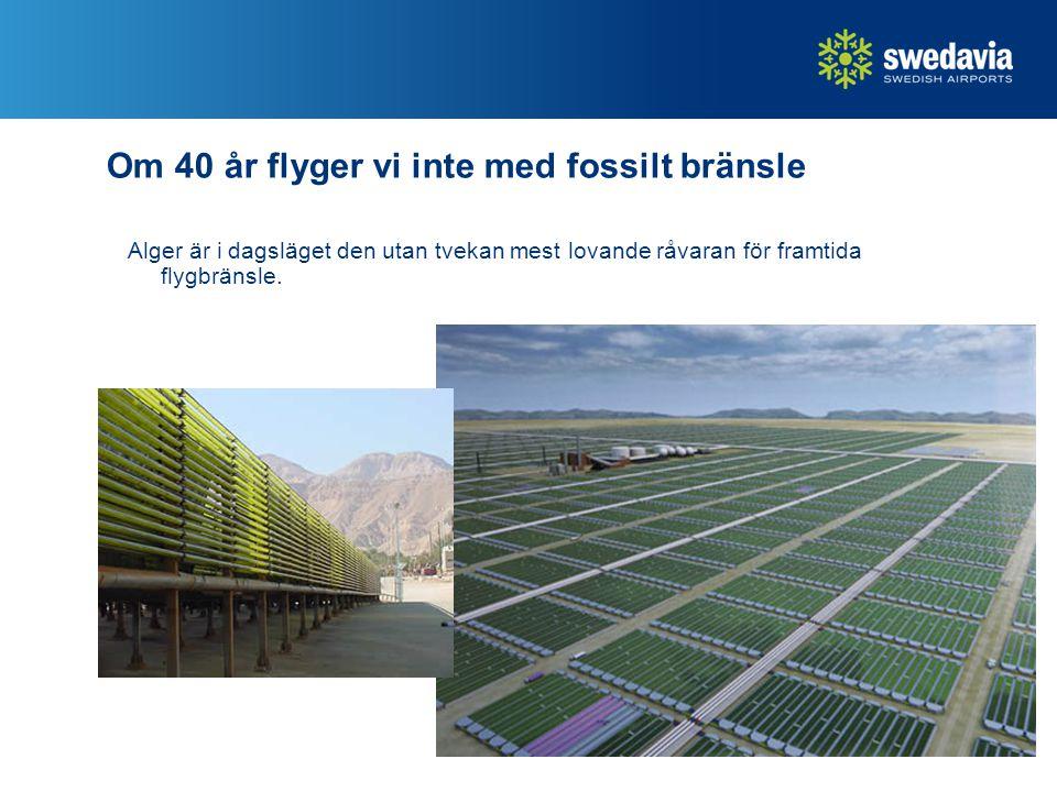 29 Om 40 år flyger vi inte med fossilt bränsle Alger är i dagsläget den utan tvekan mest lovande råvaran för framtida flygbränsle.