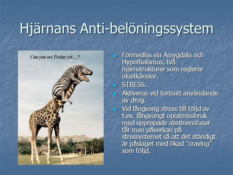Hjärnans Anti-belöningssystem Förmedlas via Amygdala och Hypothalamus, två hjärnstrukturer som reglerar olustkänslor. Förmedlas via Amygdala och Hypot