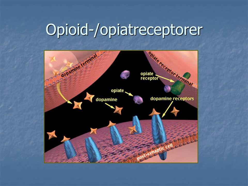 Opioid-/opiatreceptorer