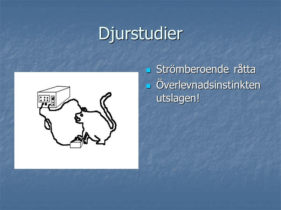 Djurstudier Strömberoende råtta Strömberoende råtta Överlevnadsinstinkten utslagen! Överlevnadsinstinkten utslagen!