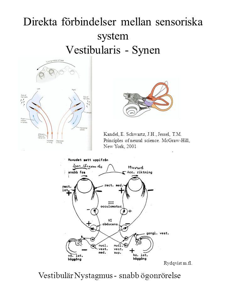 Direkta förbindelser mellan sensoriska system Vestibularis - Synen Vestibulär Nystagmus - snabb ögonrörelse Kandel, E. Schwartz, J.H., Jessel, T.M. Pr