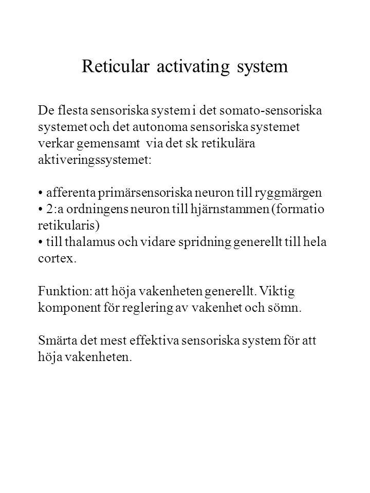 Reticular activating system De flesta sensoriska system i det somato-sensoriska systemet och det autonoma sensoriska systemet verkar gemensamt via det