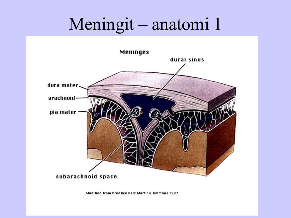 Meningit – anatomi 1