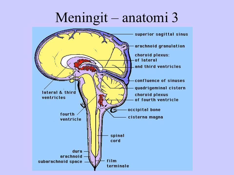Meningit – anatomi 3