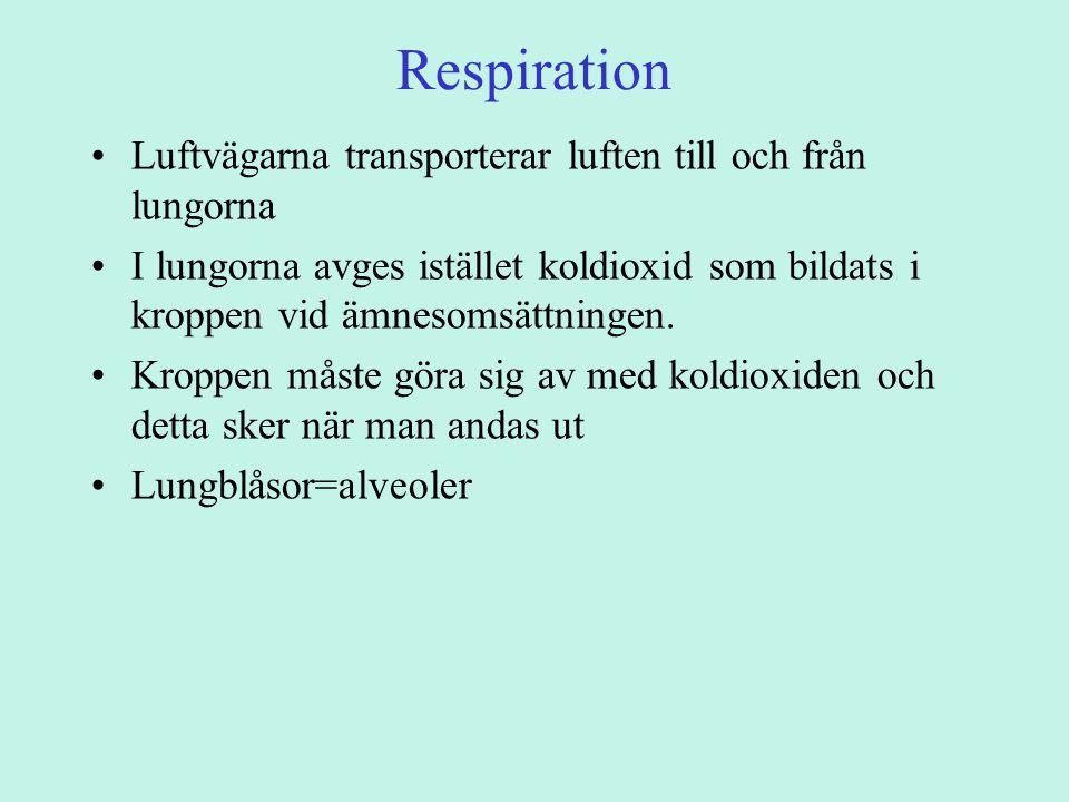 Respiration Luftvägarna transporterar luften till och från lungorna I lungorna avges istället koldioxid som bildats i kroppen vid ämnesomsättningen.