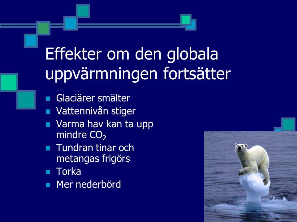 Effekter om den globala uppvärmningen fortsätter Glaciärer smälter Vattennivån stiger Varma hav kan ta upp mindre CO 2 Tundran tinar och metangas frigörs Torka Mer nederbörd