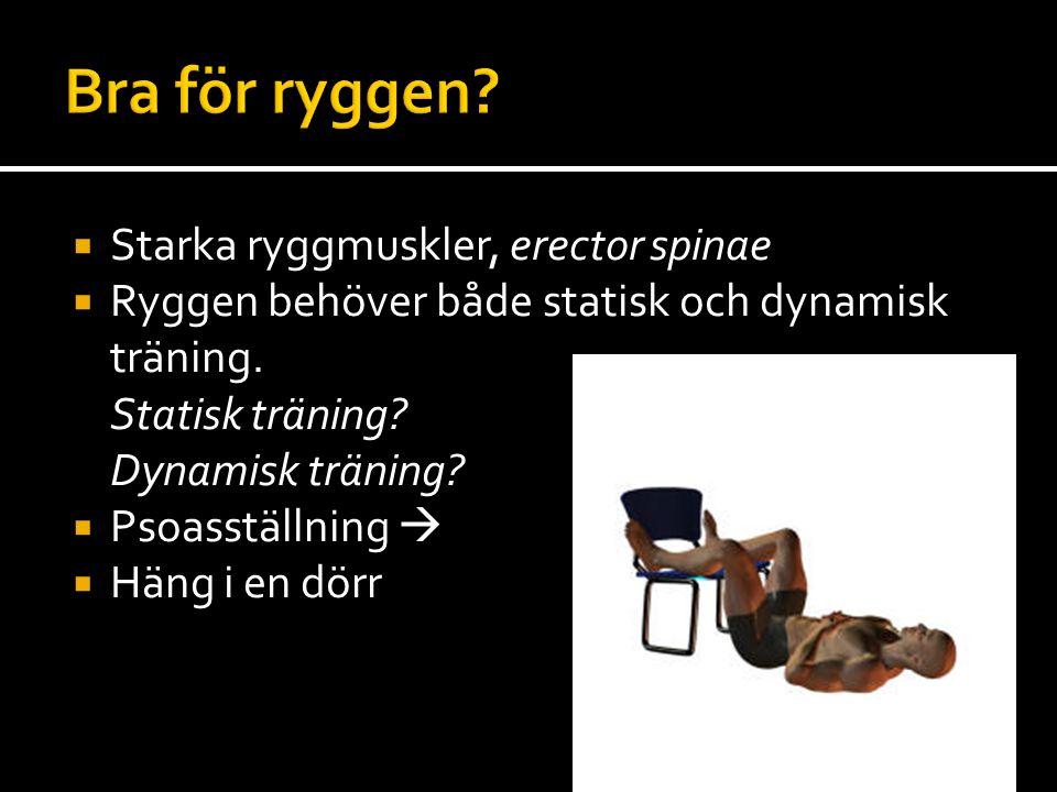  Starka ryggmuskler, erector spinae  Ryggen behöver både statisk och dynamisk träning.