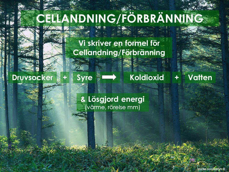 CELLANDNING/FÖRBRÄNNING Vi skriver en formel för Cellandning/Förbränning Druvsocker+SyreKoldioxid+Vatten & Lösgjord energi (värme, rörelse mm) micke s