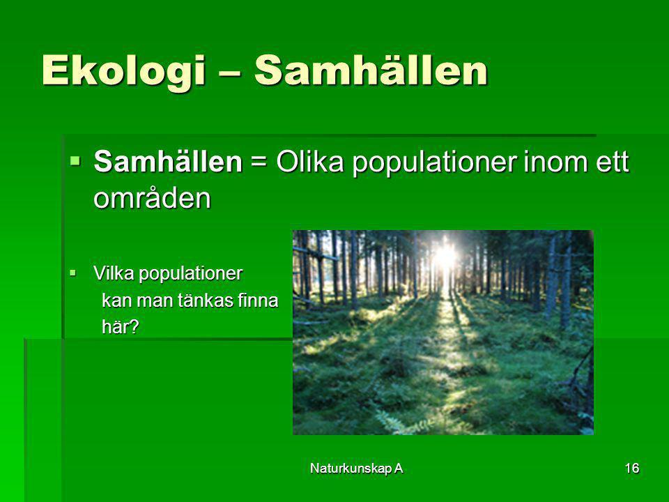 Naturkunskap A16 Ekologi – Samhällen  Samhällen = Olika populationer inom ett områden  Vilka populationer kan man tänkas finna här?