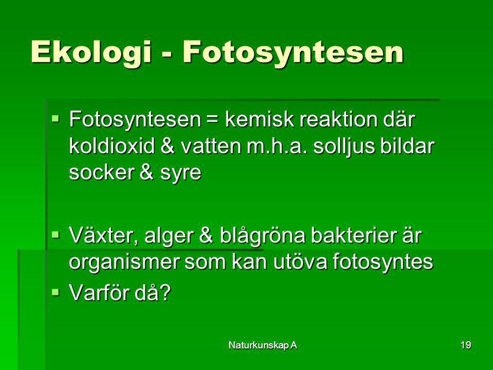Naturkunskap A19 Ekologi - Fotosyntesen  Fotosyntesen = kemisk reaktion där koldioxid & vatten m.h.a. solljus bildar socker & syre  Växter, alger &