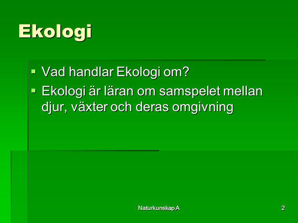 2 Ekologi  Vad handlar Ekologi om?  Ekologi är läran om samspelet mellan djur, växter och deras omgivning