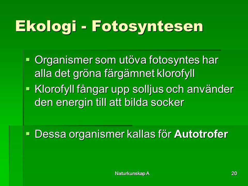 Naturkunskap A20 Ekologi - Fotosyntesen  Organismer som utöva fotosyntes har alla det gröna färgämnet klorofyll  Klorofyll fångar upp solljus och an