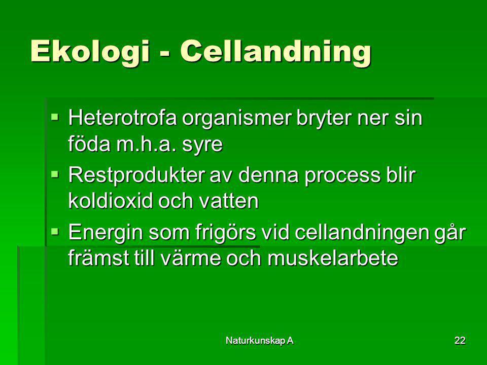 Naturkunskap A22 Ekologi - Cellandning  Heterotrofa organismer bryter ner sin föda m.h.a. syre  Restprodukter av denna process blir koldioxid och va