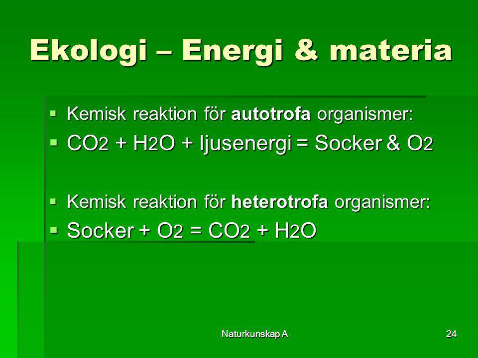 Naturkunskap A24 Ekologi – Energi & materia  Kemisk reaktion för autotrofa organismer:  CO 2 + H 2 O + ljusenergi = Socker & O 2  Kemisk reaktion f