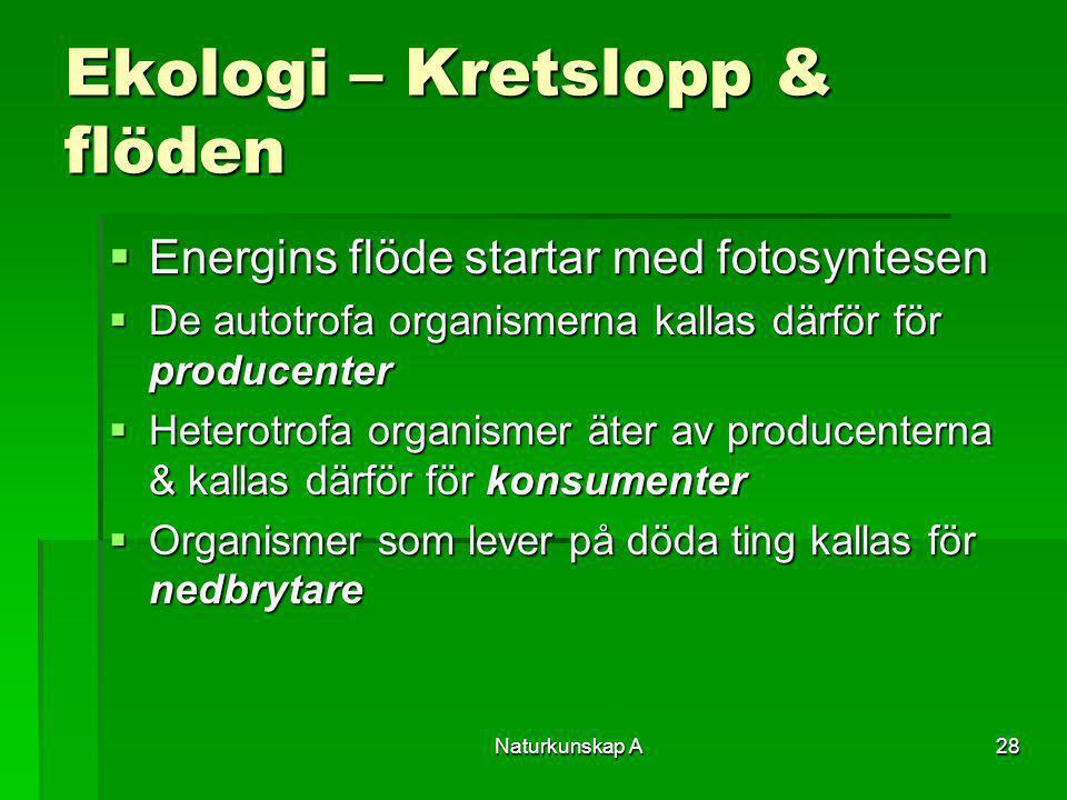 Naturkunskap A28 Ekologi – Kretslopp & flöden  Energins flöde startar med fotosyntesen  De autotrofa organismerna kallas därför för producenter  He