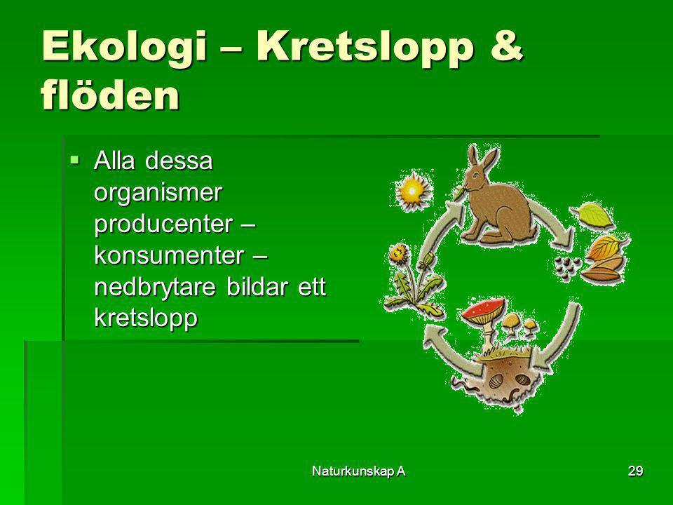 Naturkunskap A29 Ekologi – Kretslopp & flöden  Alla dessa organismer producenter – konsumenter – nedbrytare bildar ett kretslopp