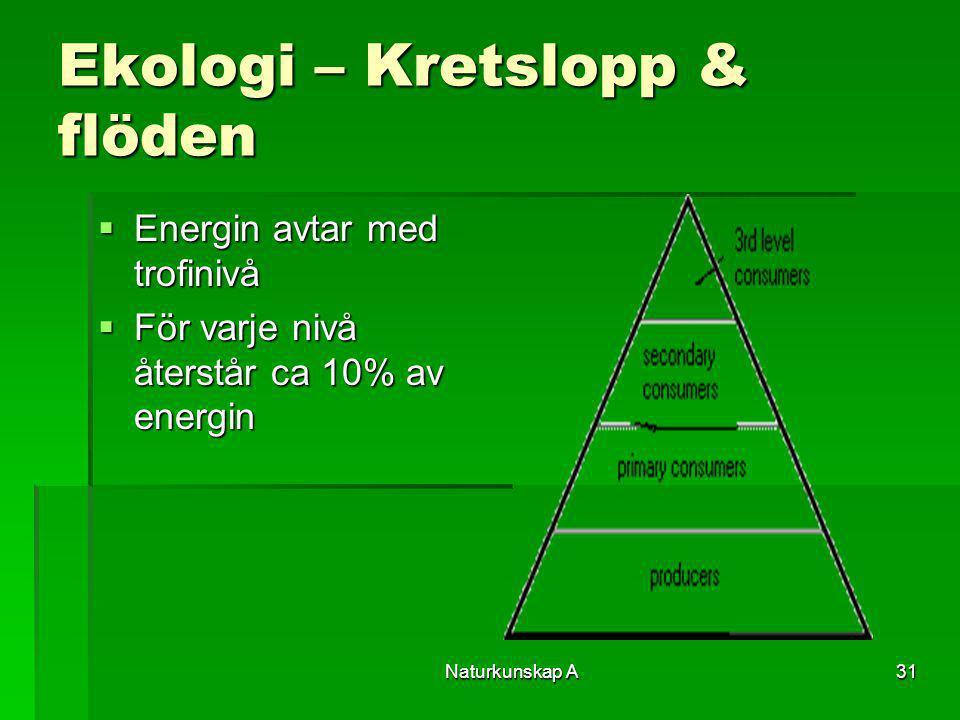 Naturkunskap A31 Ekologi – Kretslopp & flöden  Energin avtar med trofinivå  För varje nivå återstår ca 10% av energin