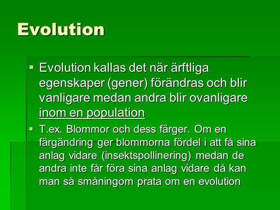 Evolution  Evolution kallas det när ärftliga egenskaper (gener) förändras och blir vanligare medan andra blir ovanligare inom en population  T.ex. B