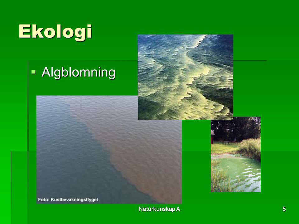Naturkunskap A5 Ekologi  Algblomning