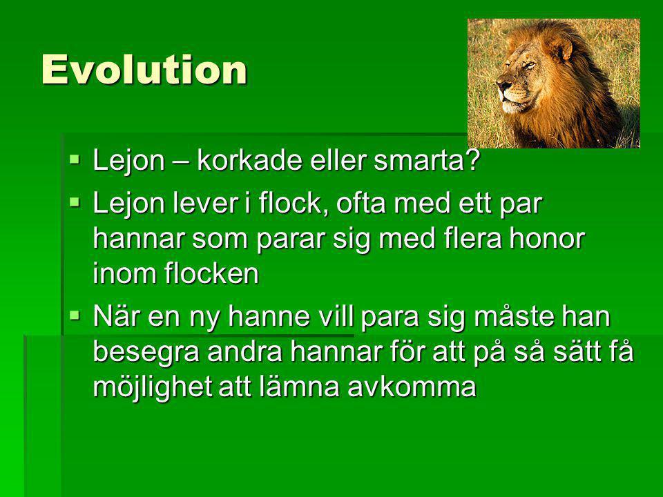 Evolution  Lejon – korkade eller smarta?  Lejon lever i flock, ofta med ett par hannar som parar sig med flera honor inom flocken  När en ny hanne