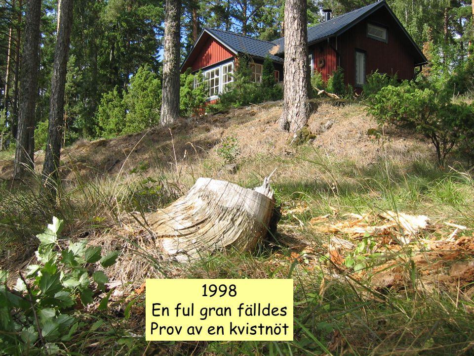 1998 En ful gran fälldes Prov av en kvistnöt