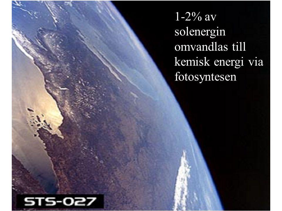 1-2% av solenergin omvandlas till kemisk energi via fotosyntesen
