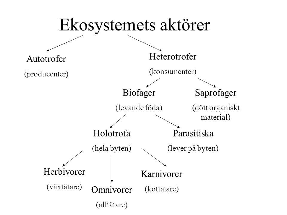 Ekosystemets aktörer Heterotrofer (konsumenter) Autotrofer (producenter) Biofager (levande föda) Saprofager (dött organiskt material) Holotrofa (hela