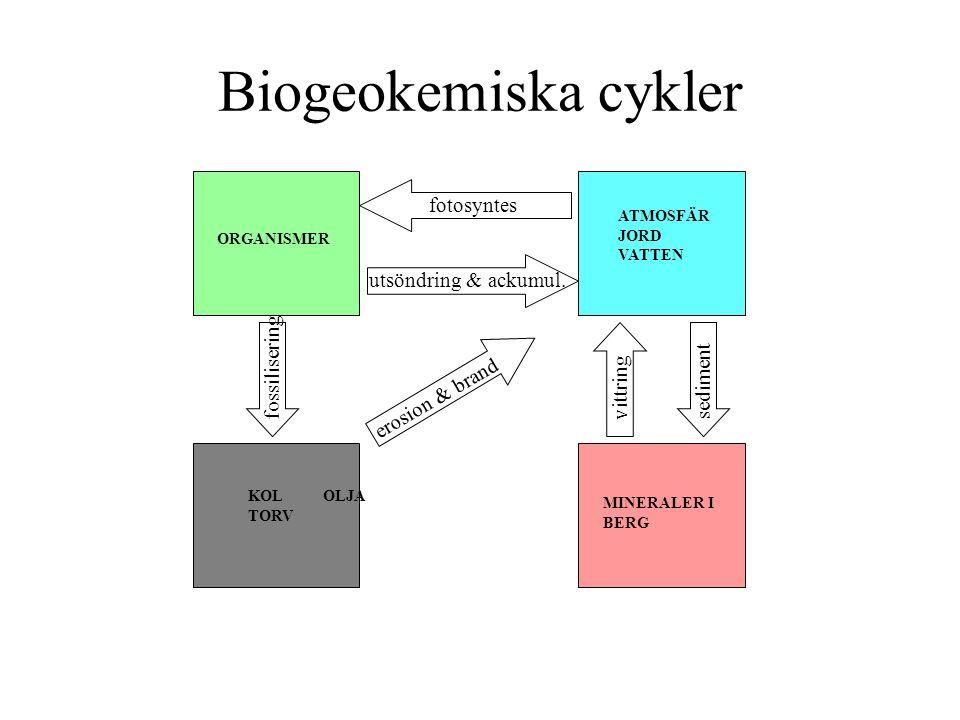 Biogeokemiska cykler ORGANISMER ATMOSFÄR JORD VATTEN KOL OLJA TORV MINERALER I BERG fotosyntes utsöndring & ackumul. fossilisering erosion & brand vit