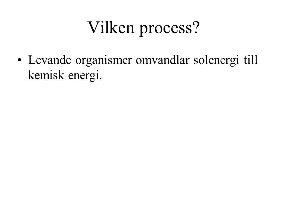 Vilken process? Levande organismer omvandlar solenergi till kemisk energi.