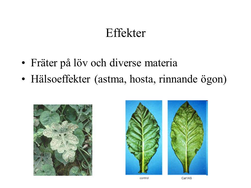 Effekter Fräter på löv och diverse materia Hälsoeffekter (astma, hosta, rinnande ögon)