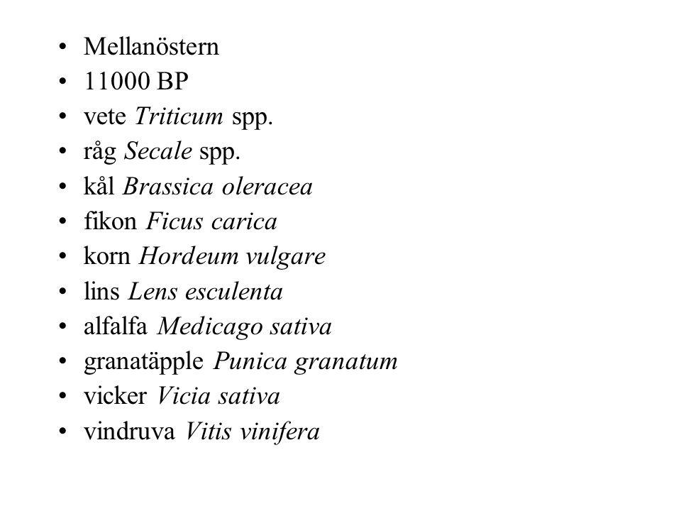 Mellanöstern 11000 BP vete Triticum spp. råg Secale spp.