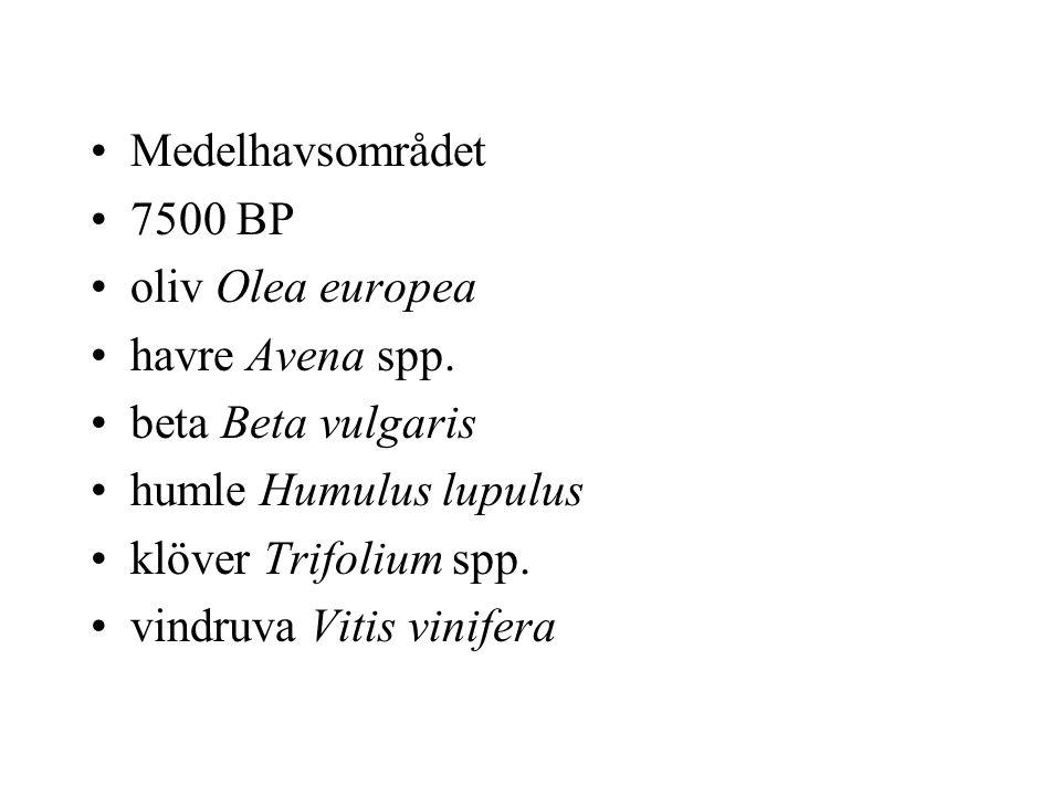 Medelhavsområdet 7500 BP oliv Olea europea havre Avena spp.