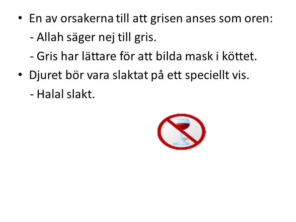 En av orsakerna till att grisen anses som oren: - Allah säger nej till gris.
