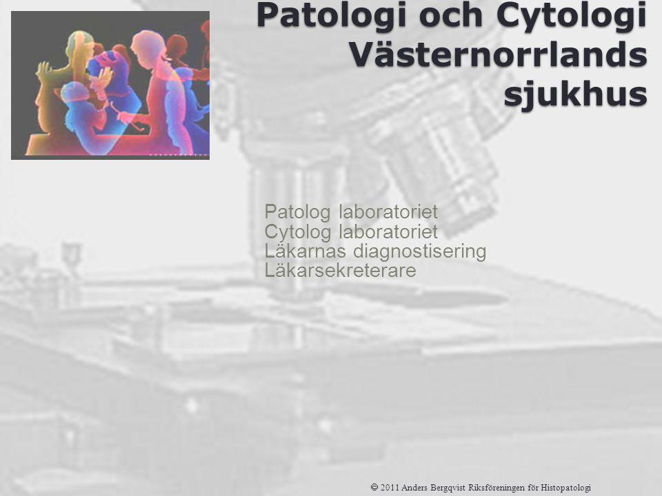 Avdelningen för Patologi och Cytologi Västernorrlands sjukhus Patolog laboratoriet Cytolog laboratoriet Läkarnas diagnostisering Läkarsekreterare  20