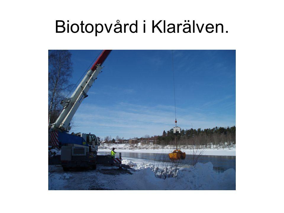 Biotopvård i Klarälven.