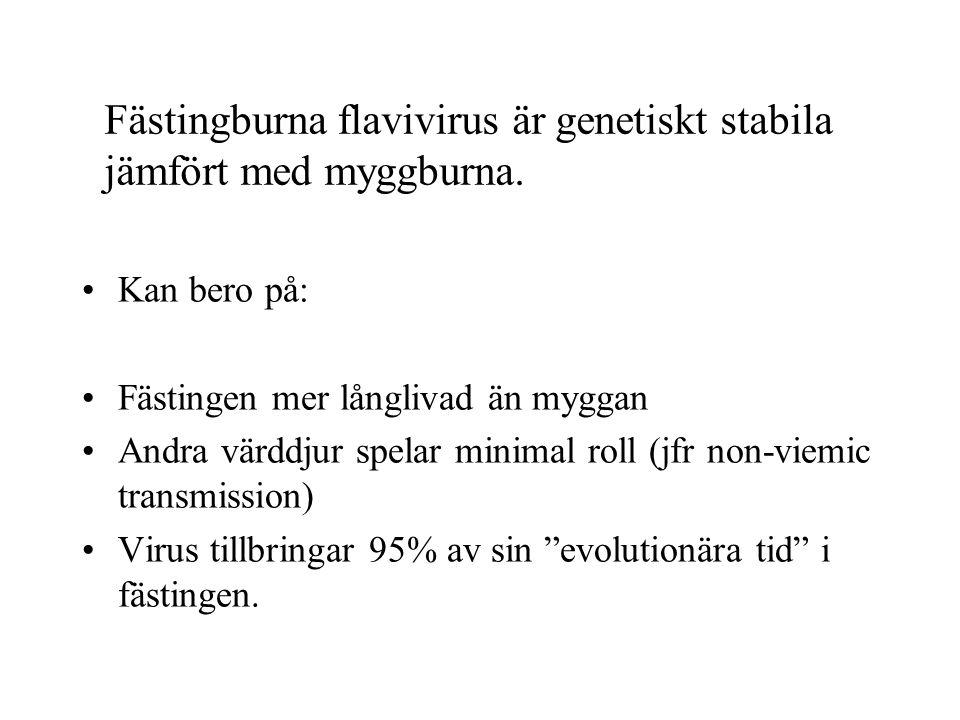 Fästingburna flavivirus är genetiskt stabila jämfört med myggburna.